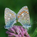 Bornholms Brand giver tilskud til formidling af sommerfuglemarken