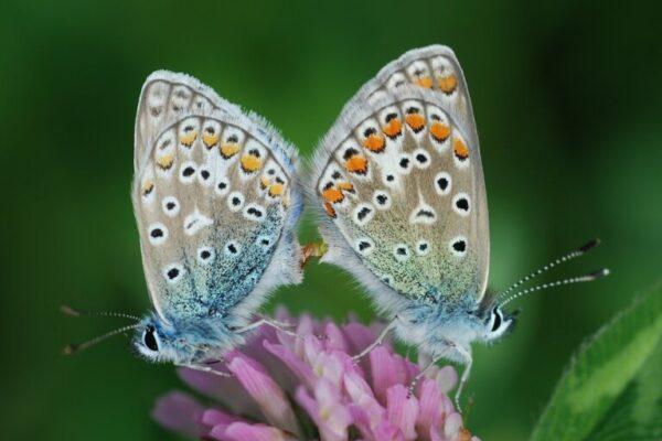 Kunst & Natur – en vandring i skulpturhave og sommerfuglemark: 22. september 2021